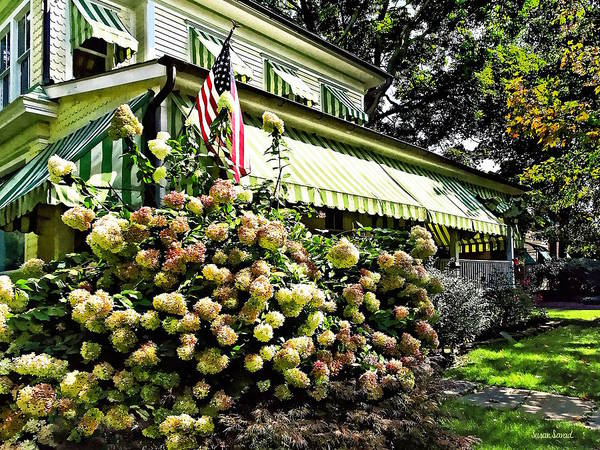 Photograph - White Hydrangeas By Green Striped Awning by Susan Savad