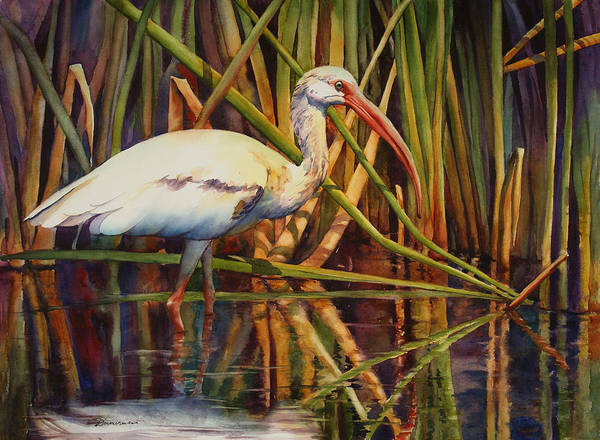 Marsh Bird Painting - White Ibis by Sue Zimmermann