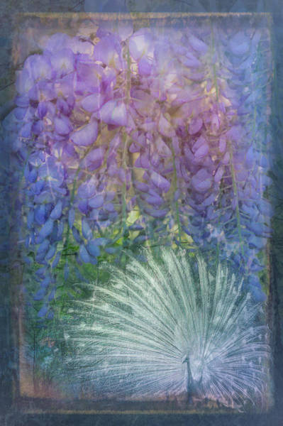 Photograph - White In Lavenders by Debra and Dave Vanderlaan