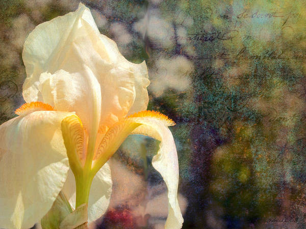 Wall Art - Photograph - White Iris by Bellesouth Studio
