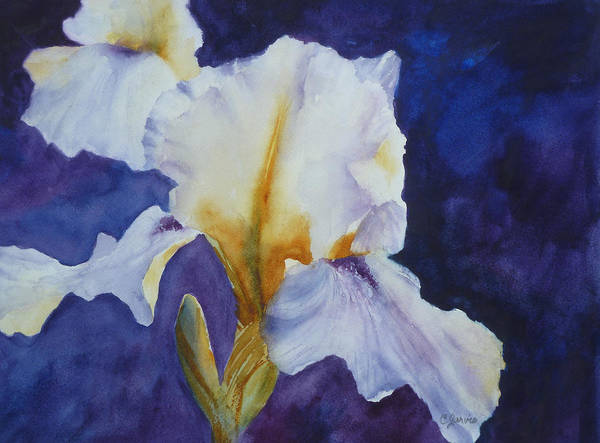 Painting - White Iris by Carolyn Jarvis