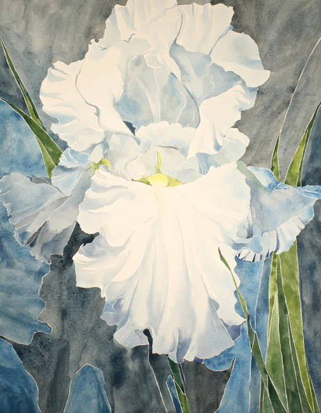 Painting - White Iris - For Van Gogh - Posthumously Presented Paintings Of Sachi Spohn   by Cliff Spohn