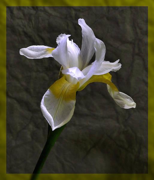 Photograph - White Iris by Mark Fuller