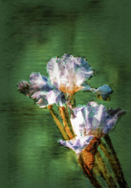 Digital Art - White Iris Painterly #h1 by Leif Sohlman