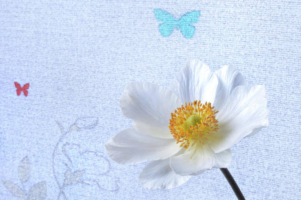 Wall Art - Photograph - White Japanese Anemone by Terence Davis