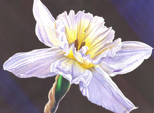 Painting - White Jonquil by Catherine G McElroy
