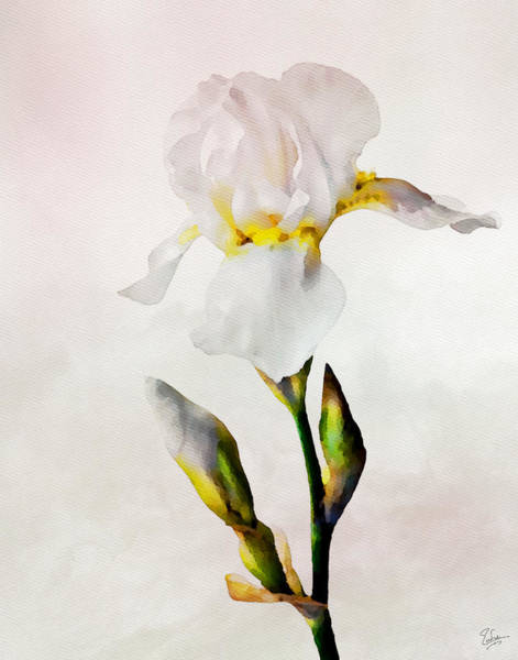 Photograph - White Lily Faux Watercolor by Endre Balogh