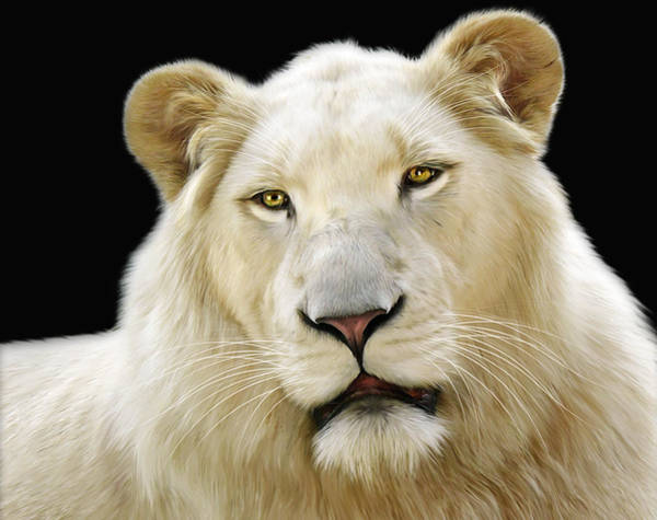 Big Cat Digital Art - White Lion by Julie L Hoddinott
