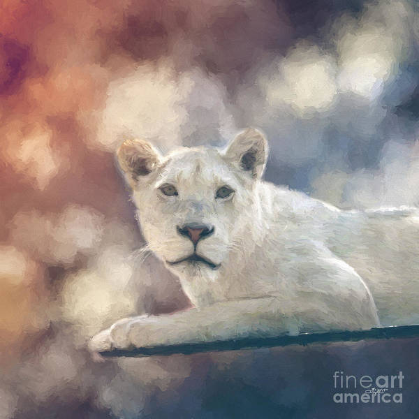 Photograph - White Lion by Jutta Maria Pusl
