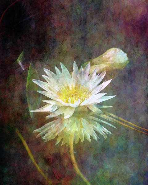 Photograph - White Lotus 2987 Idp_2 by Steven Ward