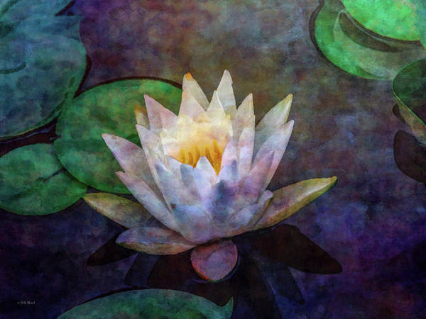 Photograph - White Lotus 4143 Idp_2 by Steven Ward