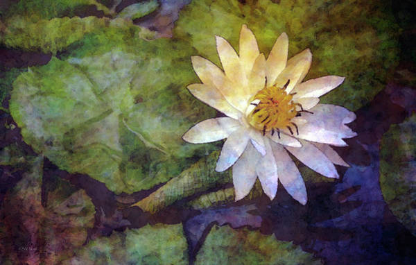 Photograph - White Lotus Between The Rain 4734 Idp_2 by Steven Ward