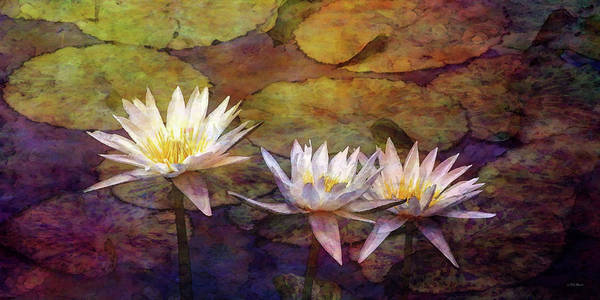 Photograph - White Lotus Trio 4441 Idp_2 by Steven Ward
