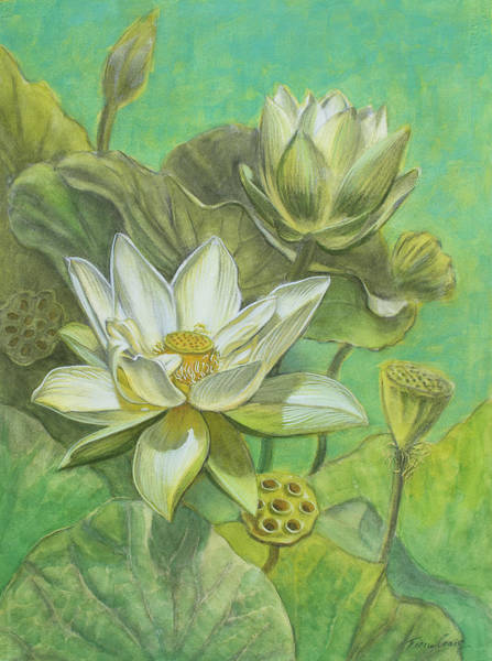 Lotus Mixed Media - White Lotuses In Turquoise Lake by Fiona Craig