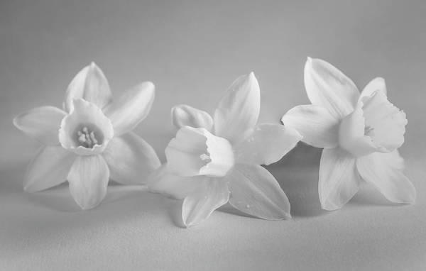 Wall Art - Photograph - White Mini Narcissus by Iris Richardson