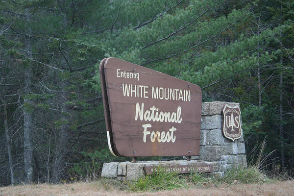 Photograph - White Mountains  by Jeremy McKay