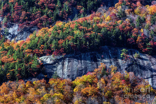 Wall Art - Photograph - White Mountains National Forest by John Greim