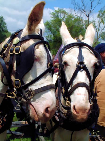 Photograph - White Mule Team by Sam Davis Johnson