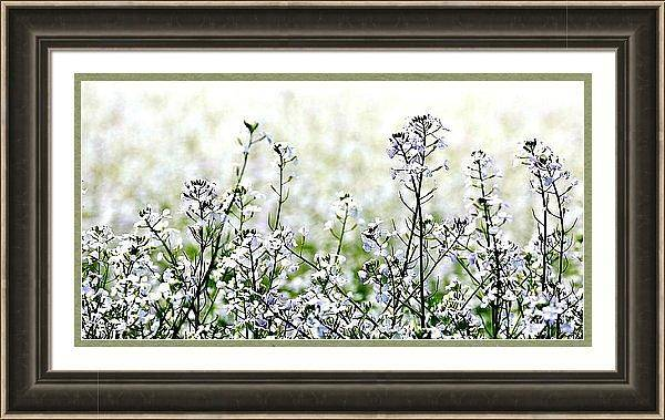 Photograph - White Mustard Framed by Jerry Sodorff