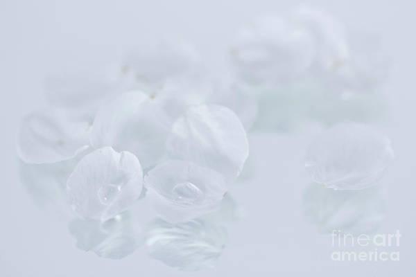 Wall Art - Photograph - White On White by Masako Metz