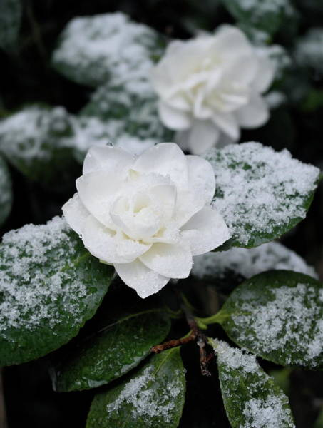 Photograph - White On White by Michele Myers