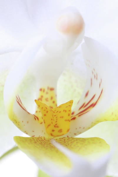 Photograph - White Orchid Flower by Juergen Roth