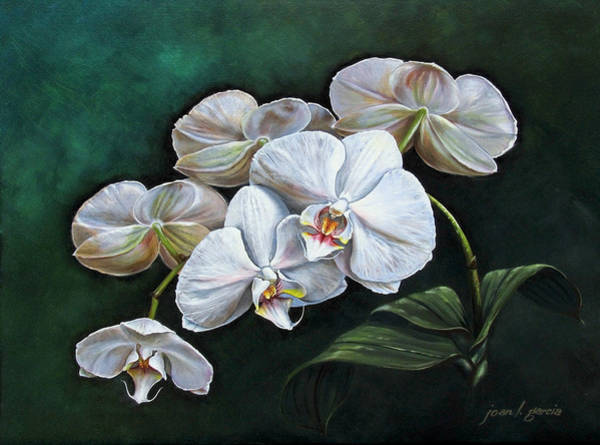 Painting - White Orchids by Joan Garcia
