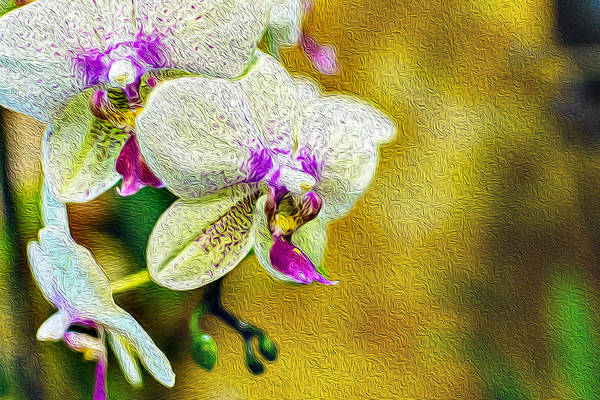 Photograph - White Orchids Oil Painting Fusion by John Williams