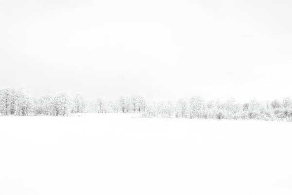 Photograph - White Out by Andrea Kollo