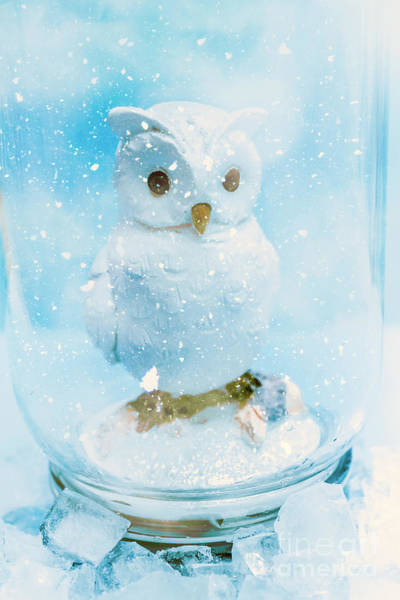 Flake Photograph - White Owl In Snow Globe by Jorgo Photography - Wall Art Gallery