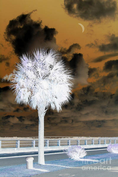 Photograph - White Palm by Donna Bentley
