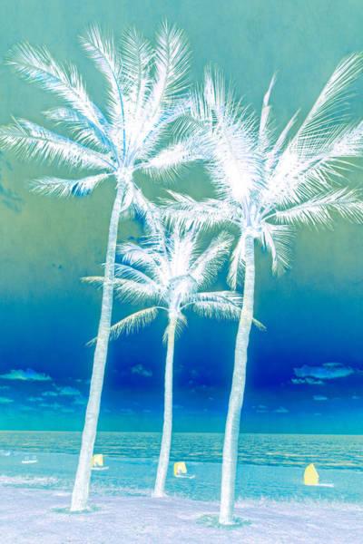 Boynton Photograph - White Palms by Debra and Dave Vanderlaan