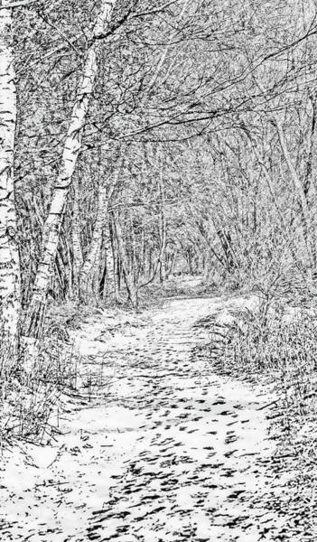 Photograph - White Path Bw #g0 by Leif Sohlman