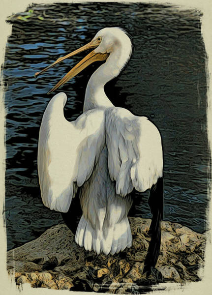 Photograph - White Pelican Spread by Alice Gipson
