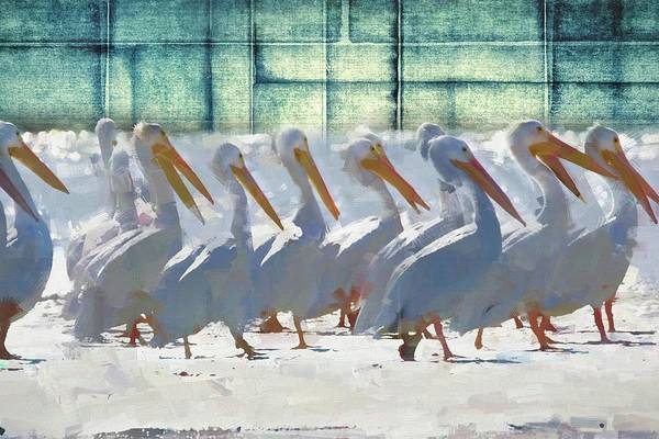 Photograph - White Pelican Squares by Alice Gipson