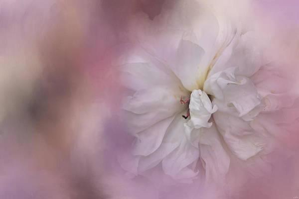 Photograph - White Peony 3 by Jai Johnson