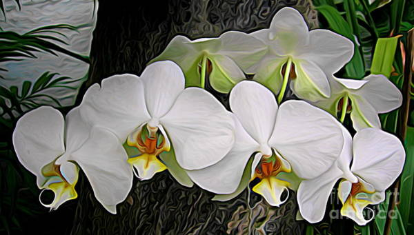 Photograph - White Phalaenopsis Orchids With Expressionist Effect by Rose Santuci-Sofranko