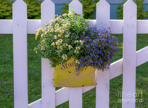 Photograph - White Picket Fence Flower Basket by Dale Powell