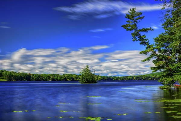 Photograph - White Pine Arching For The Sky by Dale Kauzlaric