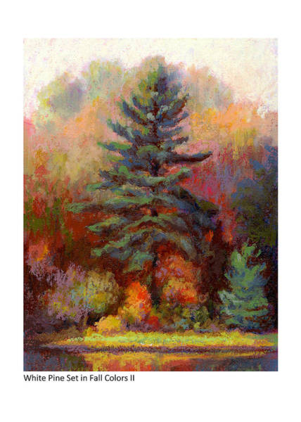 Pastel - White Pine Set In Fall Colors II by Betsy Derrick
