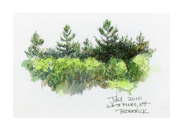 Mixed Media - White Pines, Nh by Betsy Derrick