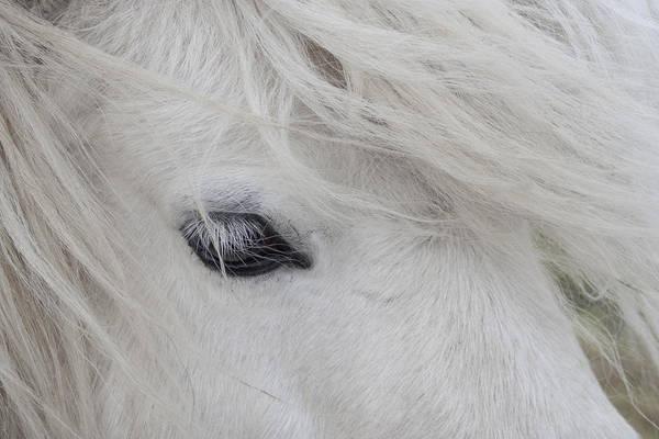 Photograph - White Pony by Karen Van Der Zijden