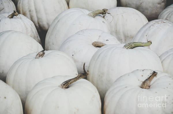 Photograph - White Pumpkins by Andrea Anderegg