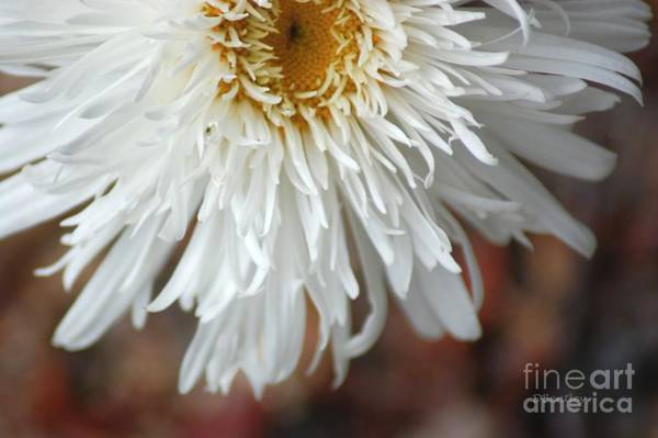 Photograph - White Pure Flower by Donna Bentley