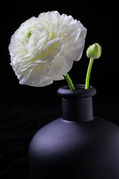Ranunculus Photograph - White Ranunculus In Black Vase by Garry Gay