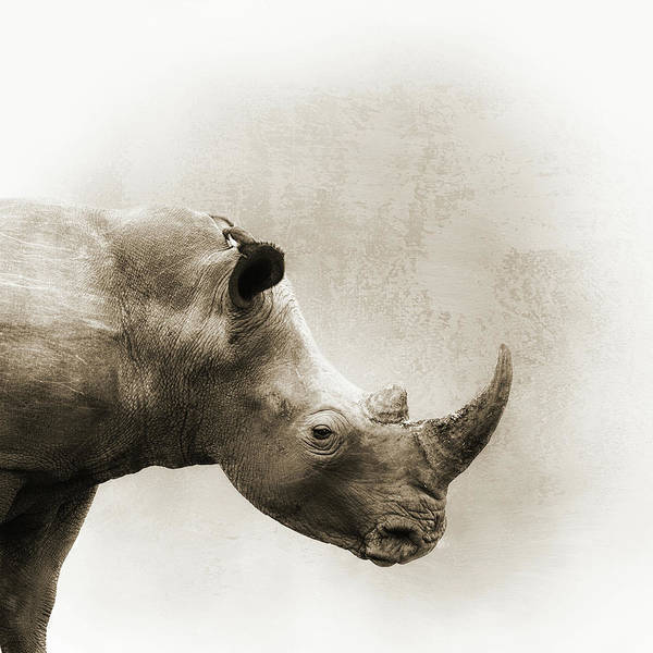 Wall Art - Photograph - White Rhino Sepia Closeup Square by Susan Schmitz