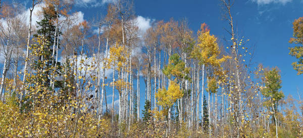 Photograph - White River Forest Trees Against The Sky by Cascade Colors