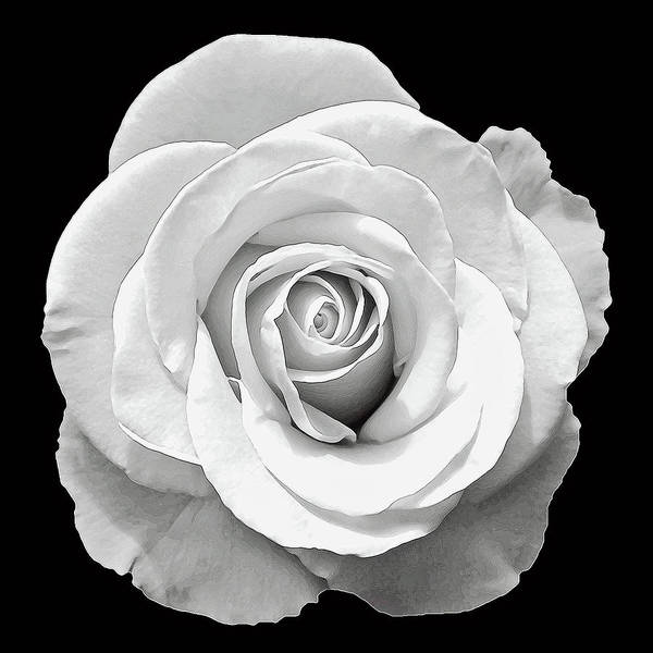 Wall Art - Photograph - White Rose by Aimee L Maher ALM GALLERY