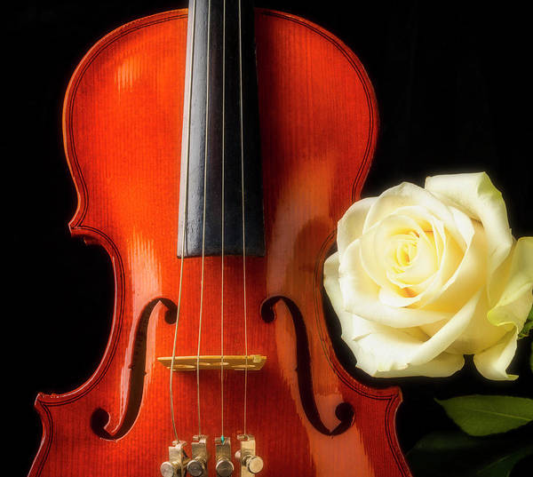 Foilage Photograph - White Rose And Violin by Garry Gay