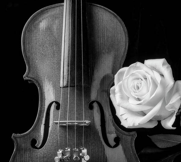 Bluegrass Photograph - White Rose And Violin In Black And White by Garry Gay